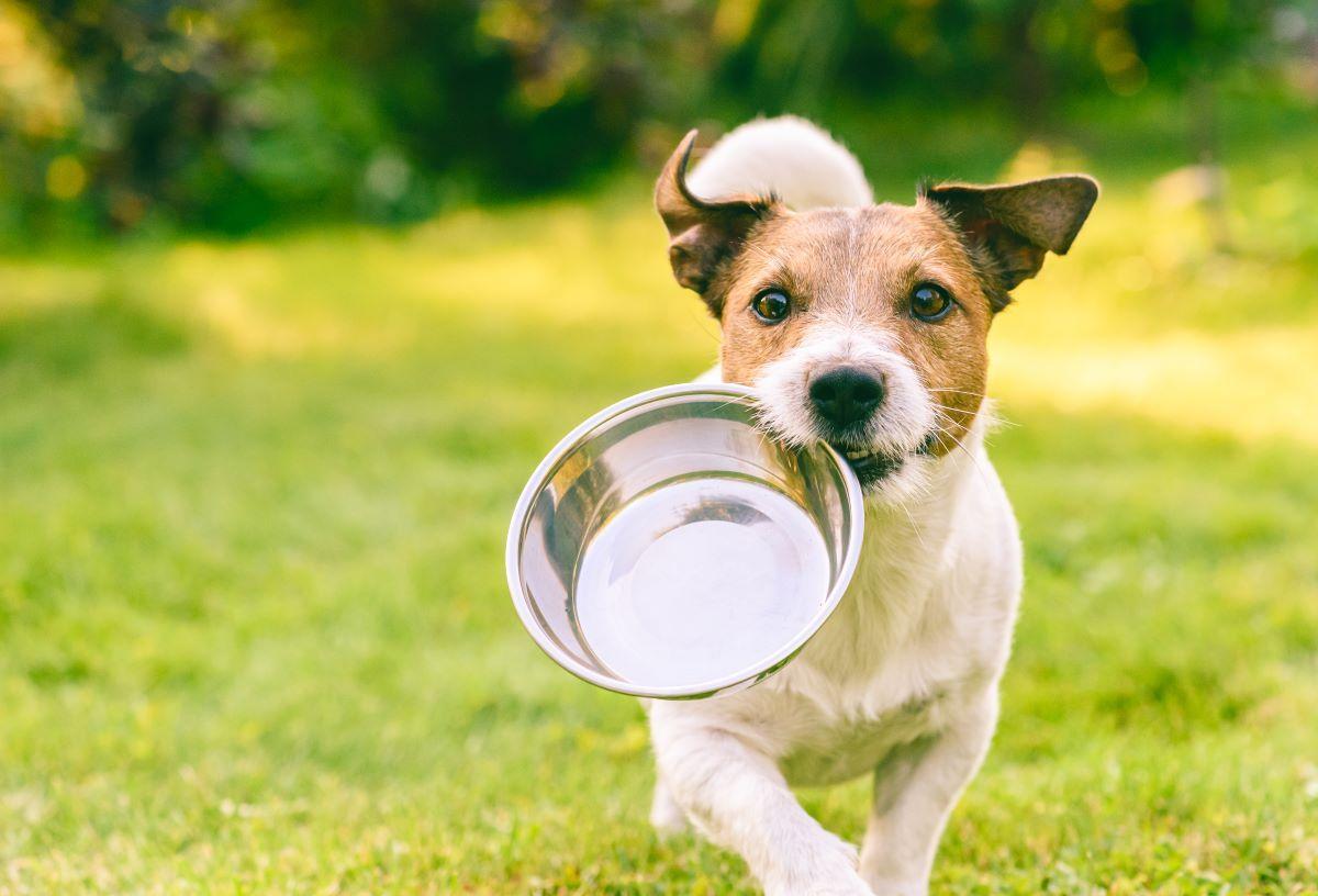 Wyższe opłaty za posiadanie psa 2022