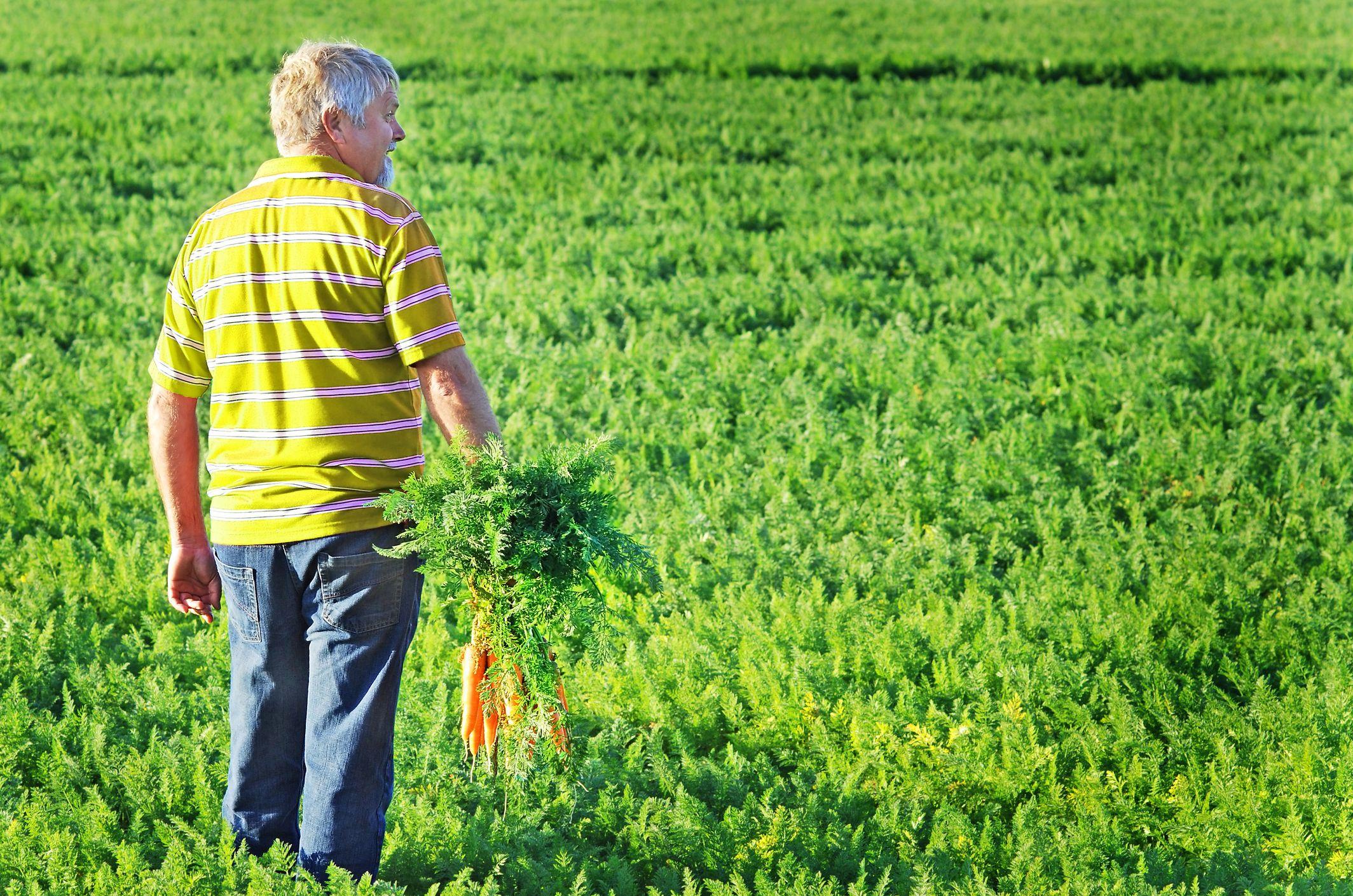 Przychody z działalności rolniczej