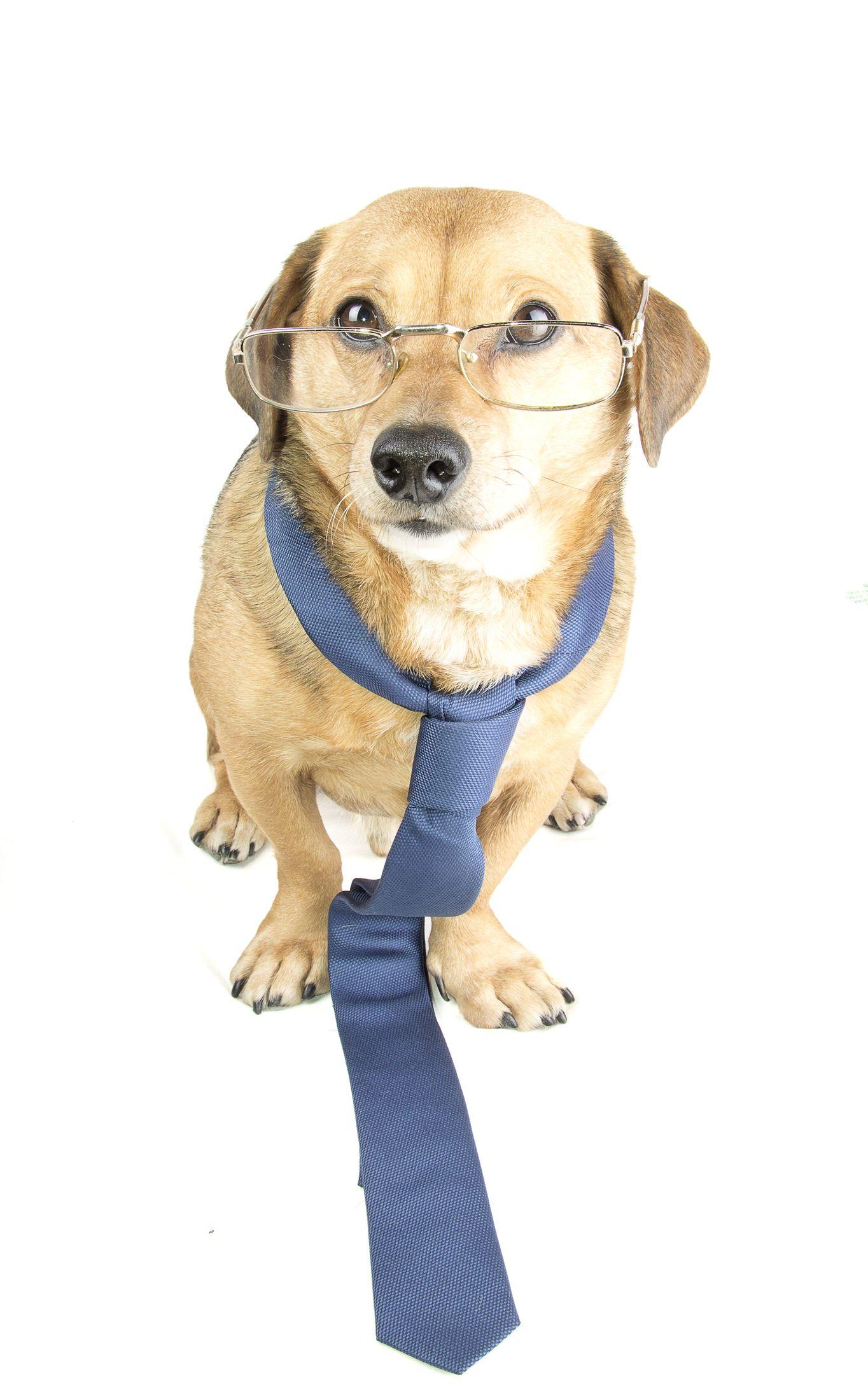 Pies lub kot w firmie – głaszcz je tylko w celach służbowych