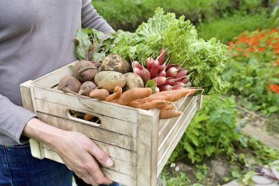 Sezonowa sprzedaż warzyw i owoców. Czy należy zapłacić podatek do US?