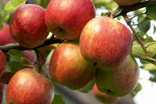 Normy szacunkowe działów specjalnych produkcji rolnej 2020