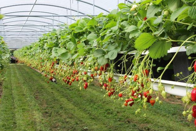 Obowiązki rolnika wynikające z umowy o pomoc przy zbiorach