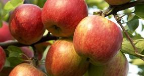 Obowiązki rolników dot. PIT z tytułu umowy o pomoc przy zbiorach