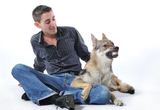 Podatek od psa - podatki w praktyce