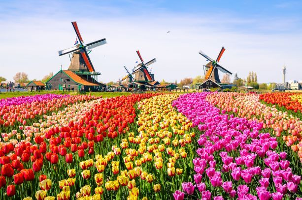 Nowe numery VAT w Holandii