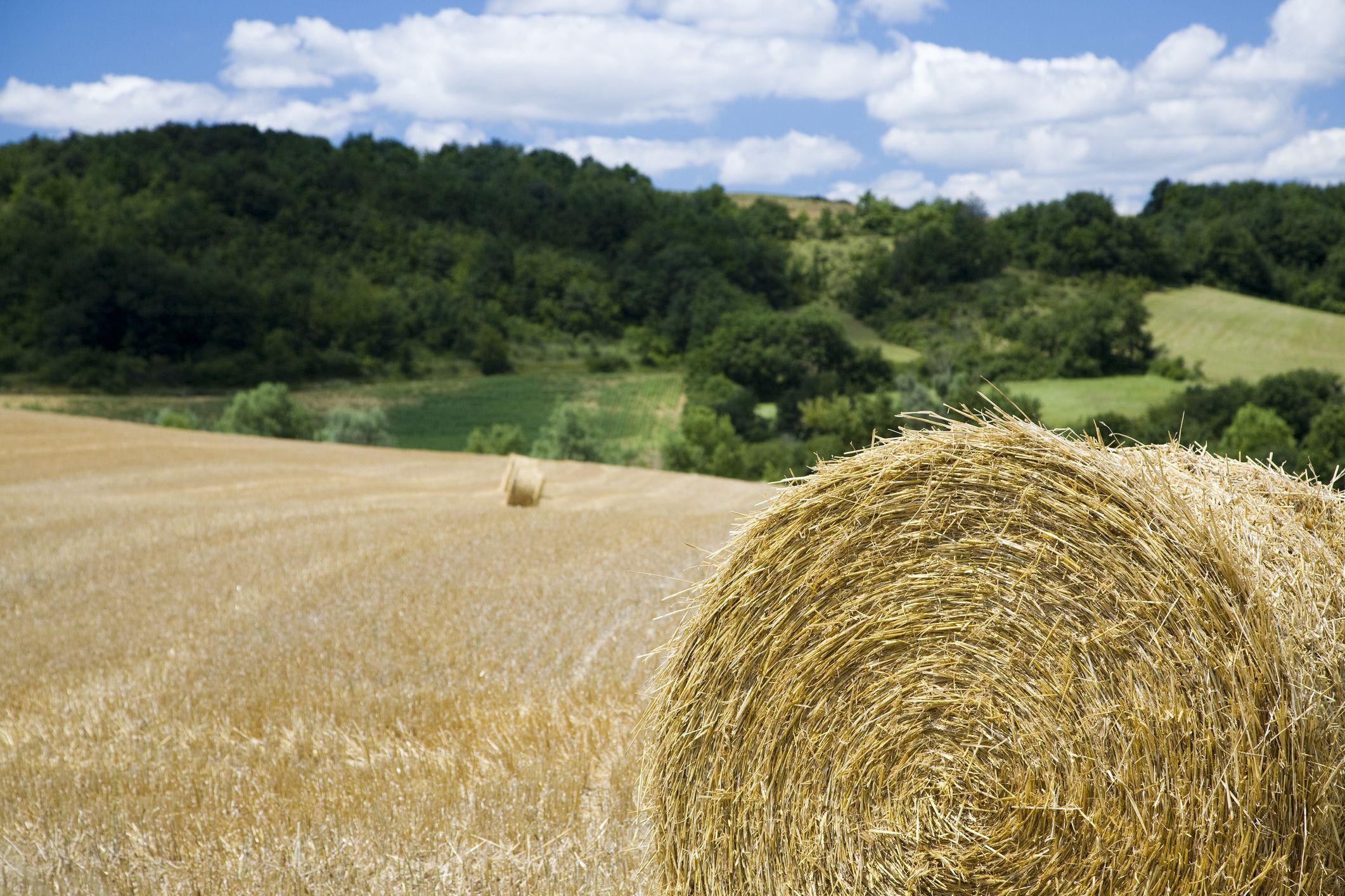 Podatek rolny - interpretacja ogólna